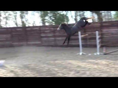 change_video_youtube2('3-Lg40wpzEg','3 ans par ELDORADO DE HUS');