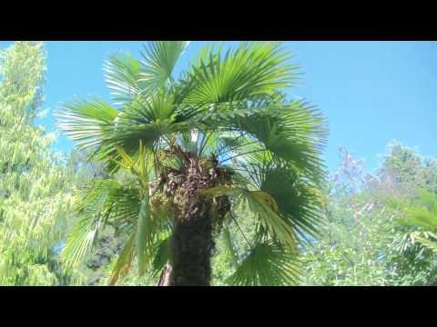 Сочи 2016 I Сочинский дендрарий I Ботанический сад Сочи I деревья, птицы и т.д.