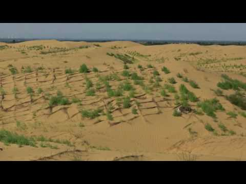 Future Forest Kubuqi Desert Project