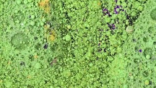 Bright Collors Bubbles Oil Ink | Stock Footage - Videohive