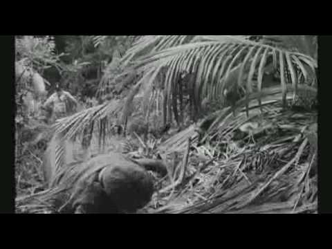 Lord of the flies 1963 – Beginning