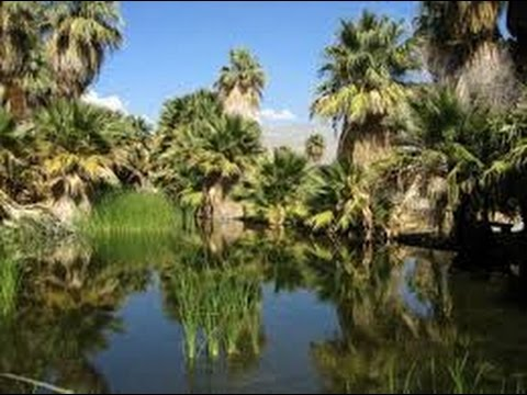 Thousand Palms Thousand Palms Oasis Preserve