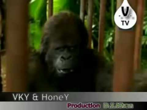monkey punjabi