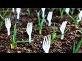 11 Gardening Hacks That Will Blow Your Mind Away