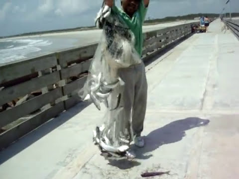 Cast net fishing HUGE mullet kingfish school in FLORIDA PINOY PHILIPPINE.wmv