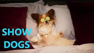 Show Dogs Soundtrack - No Suspects