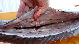 WORMS in an Amberjack?!?!