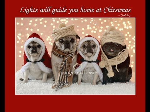 Pugs Cutest Christmas Photo Shoot