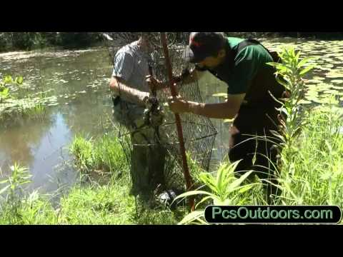 Trapping Snapping Turtles - Part Two - The Catch Snapping Turtles - Checking the Turtle Traps!