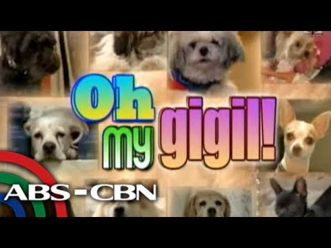 Korina, Sharon, Toni show off their dogs