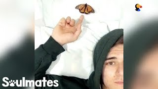 Guy Becomes Best Friends With A Butterfly | The Dodo Soulmates
