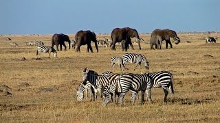 Masai Mara - safari adventure in a wildlife paradise - Predators, big herds and wildebeest migration