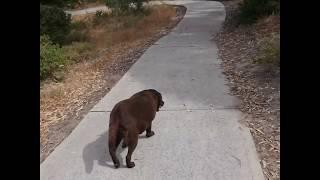 3 Dog Parks in Mandurah