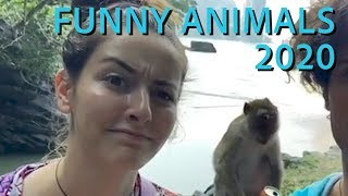 Funny Animals 2020 || Funny Animal Videos