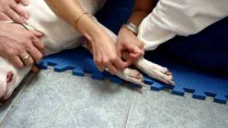LI Veterinary Acupuncture
