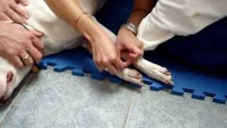 LI Veterinary Acupuncture