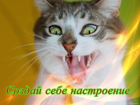 Забавное и смешное видео о животных кошки собаки Позитив для детей Создай себе хорошее настроение