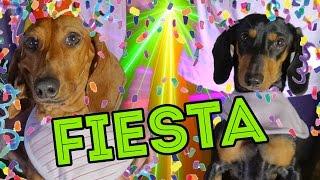 CUMPLI 4 AÑITOS!! | LOS POLINESIOS VLOGS