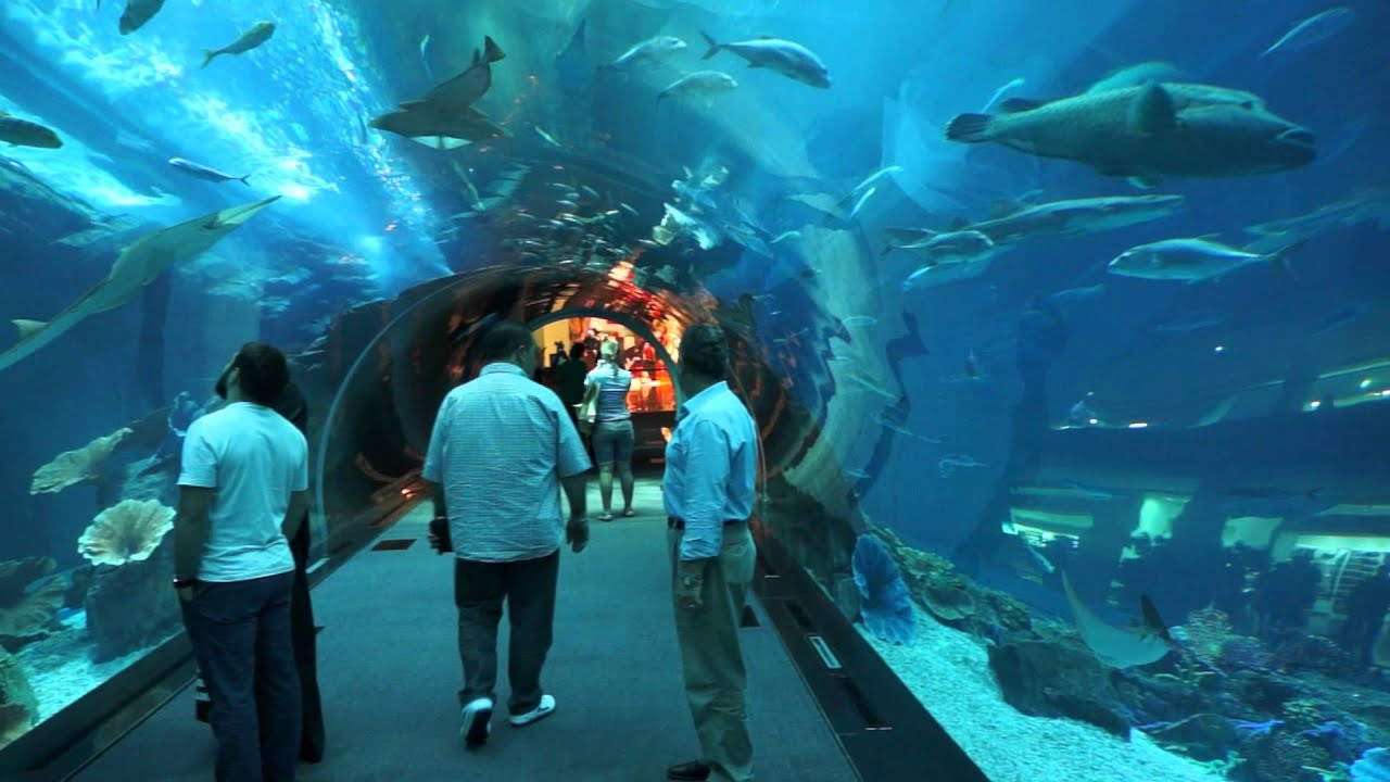 Best Aquarium In The World Must See Dubai Part 1 Youtube