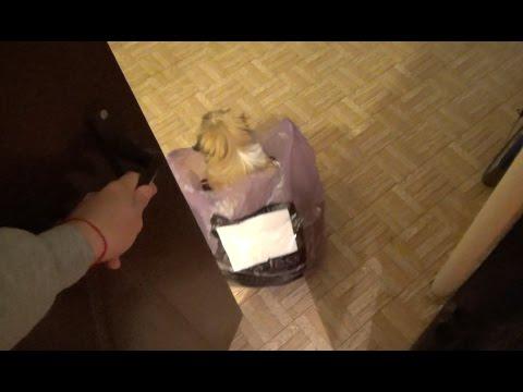 Настоящая собака из Китая! Я в шоке:)