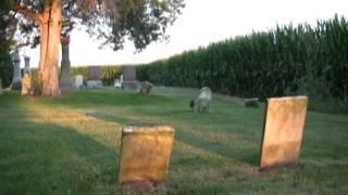 Watch Hank Williams Beyond The Sunset video