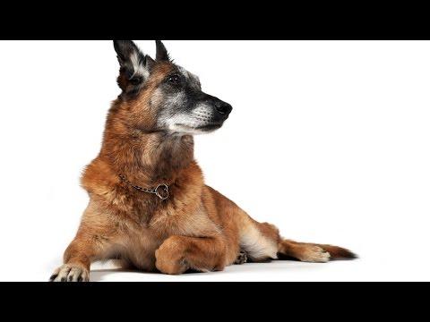 Clique e veja o vídeo Curso Adestramento de Cães de Guarda - Dessensibilização - Cursos CPT