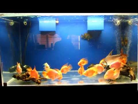 240 Gallon Acrylic Fish Tank For Sale