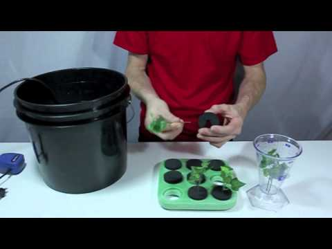 FloatCloner floating hydroponic cloning system