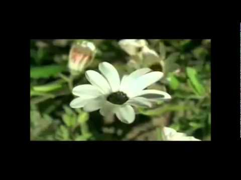 Devakant - The Beloved earth