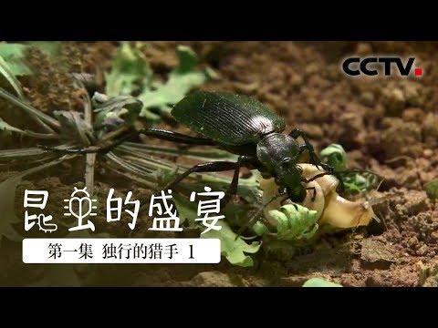 中國-昆蟲的盛宴