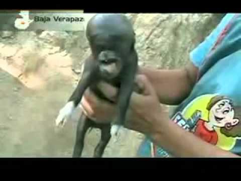 Porco nasce com feições humanas na Guatemala e horroriza família (2011 )