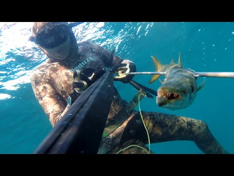 Turna-kefal-Sargoz-eskina izmir zipkin avi pesca submarina,pescasub,spearfishing from Turkey