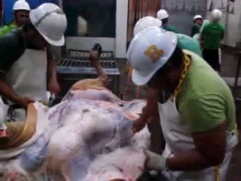 Tagum Butcher - Cattle Slaughtering (RITCHEL GALLEGO)