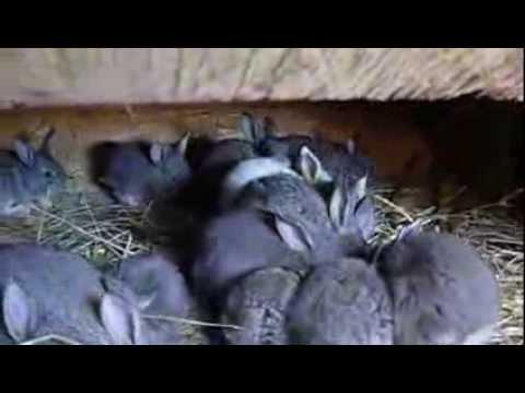 Клетки для кроликов для молодняка своими руками