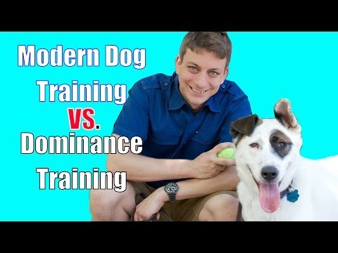 The Dominance Myth In Dog Training Explained video