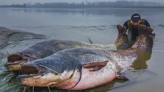 BIG RECORD CATFISH TALL 8,50 FEET OVER 260 POUND - HD by CATFISHING WORLD