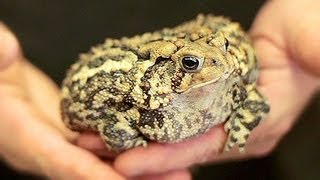 Caring For Pet Amphibians