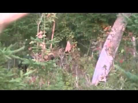 Moose Call 2015 New Brunswick Canada