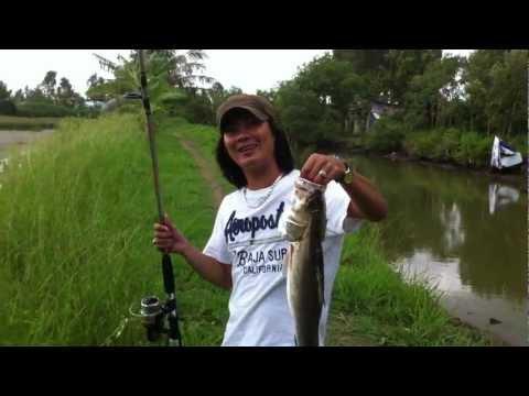 câu cá to ( cá chẽm )