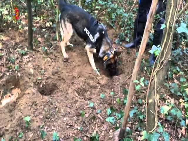 Cani Poliziotto in Azione Trovano Cadavere nel Bosco - Video