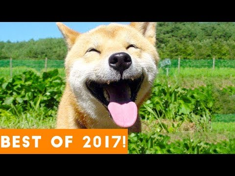 Top 200 Highlights of Animals - VERY FUNNY ANIMALS