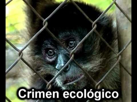 Tráfico de animales silvestres y maltrato de animales en circos