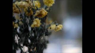 Watch Josh Wilson Fall Apart video