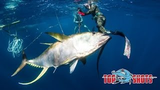 Spearfishing 100Kg Yellowfin Tuna