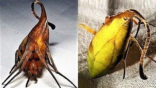 9 NEW Weird Spider Species