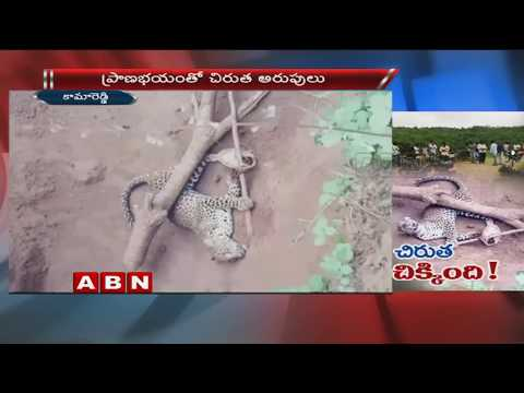 Forest Officers Caught cheetah At kamareddy District | ABN Telugu