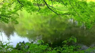 ดนตรีเพื่อสมาธิ4 (ผ่อนคลาย บำบัดความเครียด) Meditation music