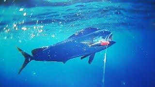 Mahi Mahi And Mackerel Breaking In The New Boat