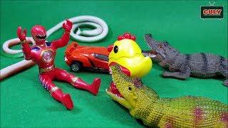 Siêu nhân khủng long đỏ giải cứu gà con khỏi cá sấu và rắn đồ chơi trẻ em
