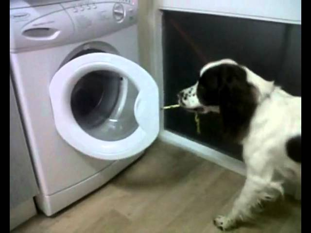 The FUNNIEST Dog Video EVER!!!!!!!!!!!
